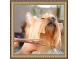 Логотип Салон стрижек для собак